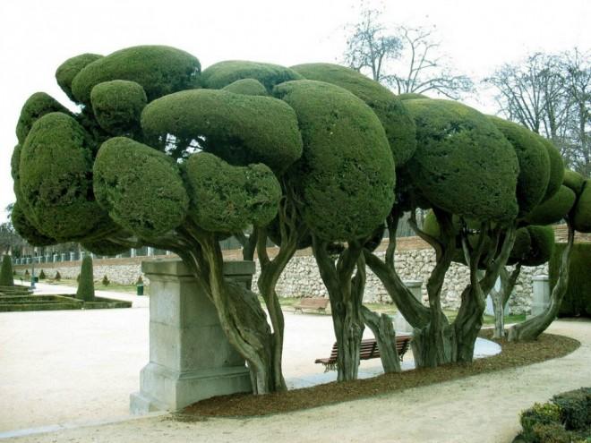 beautiful trees brain