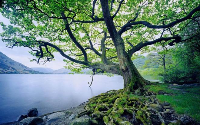 beautiful trees riverside