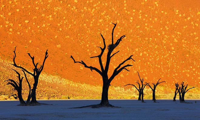 beautiful trees dead trees park namibia