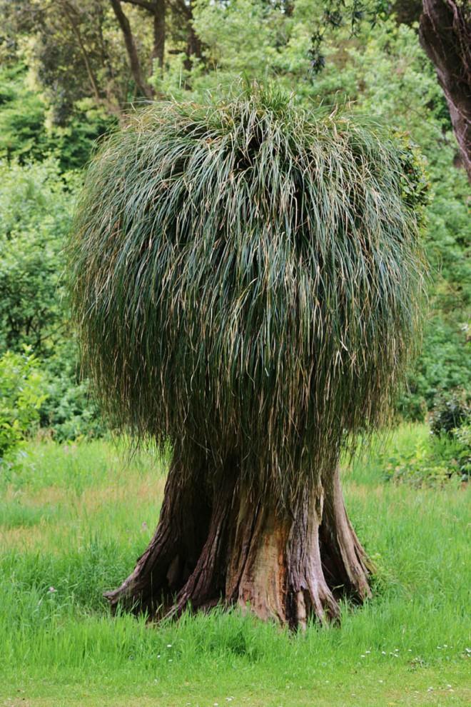 beautiful trees hairy