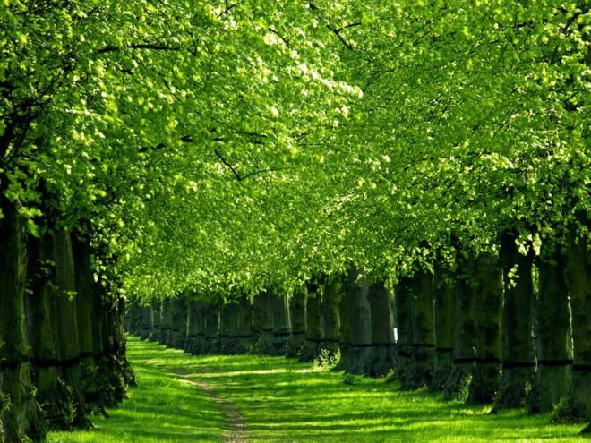 beautiful trees path
