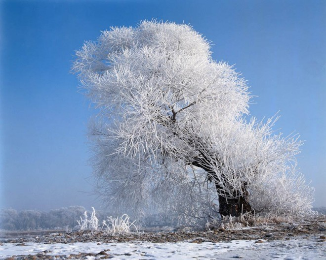 beautiful tress white