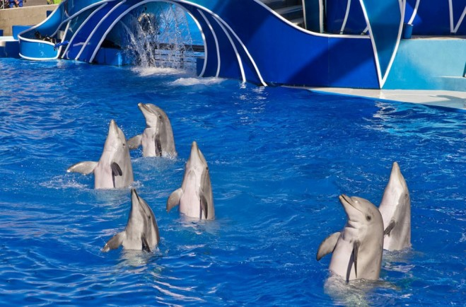 places to visit in california sea world san diego