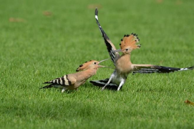 funny birds attack