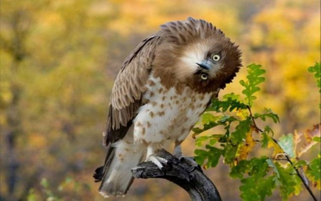 funny birds crazy eagle