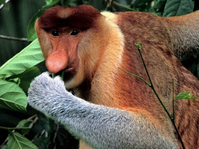 weird animals monkey