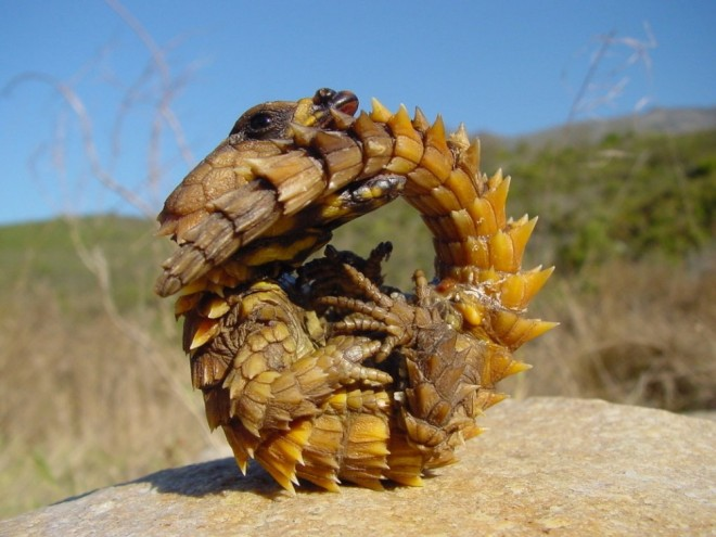weird animals worm