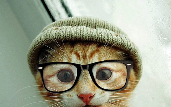funny-beautiful-amazing-cute-cat-with-spectacle-sun-glass
