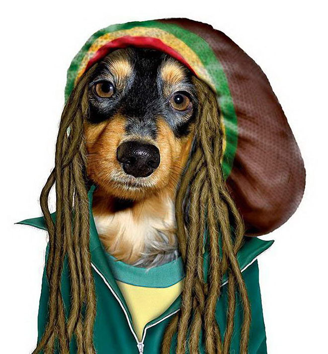 BOB MARLEY - Dog Disguisefamous person faces celebrity animal funny