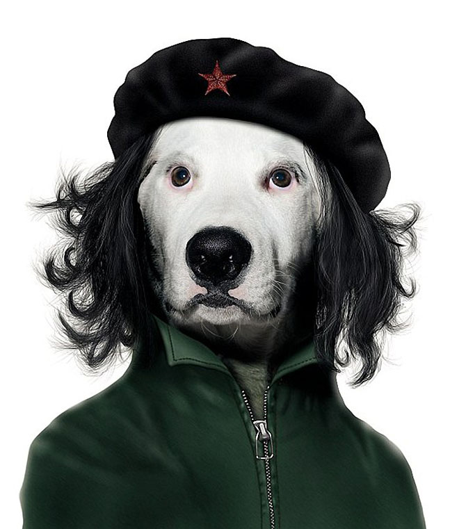 Che Guevara - Dog Disguisefamous person faces celebrity animal funny