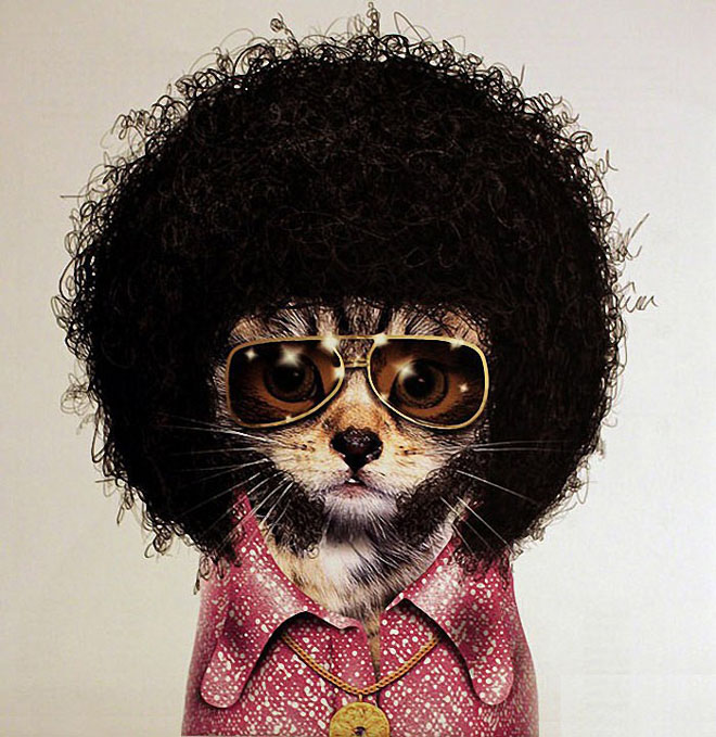 DISCO - Dog Disguisefamous person faces celebrity animal funny