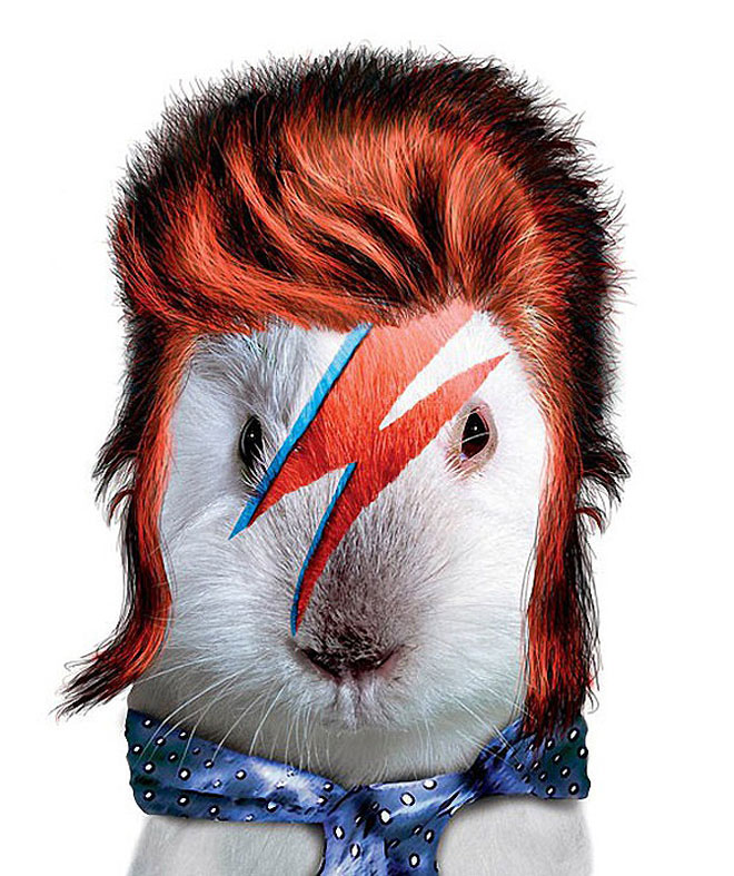 David Bowie - Dog Disguisefamous person faces celebrity animal funny
