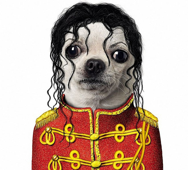 MICHAEL JACKSON - Dog Disguisefamous person faces celebrity animal funny
