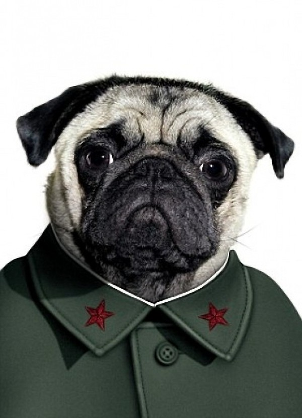 Mao Tse-tung - Dog Disguisefamous person faces celebrity animal funny