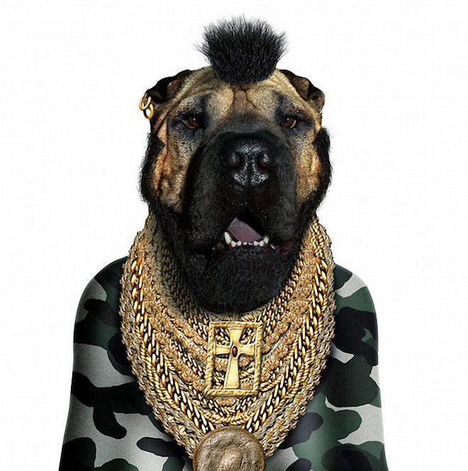 Mr T - Dog Disguisefamous person faces celebrity animal funny