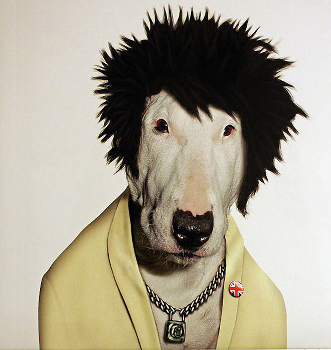 Sid Vicious - Dog Disguisefamous person faces celebrity animal funny