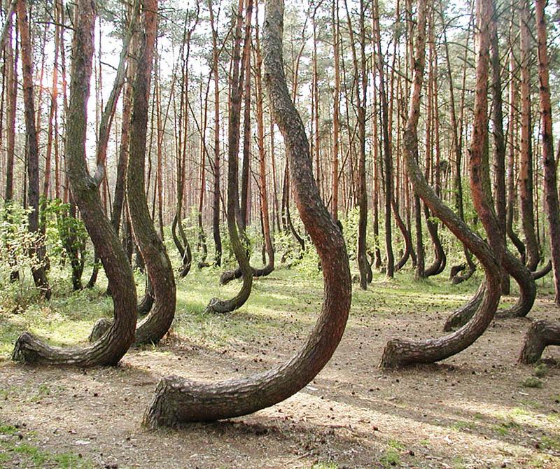beautiful trees anchor