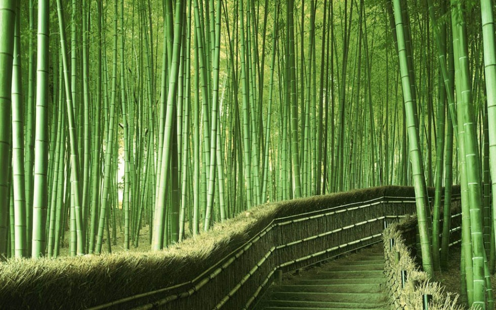 beautiful trees bamboo foresr