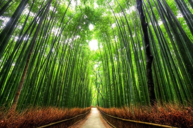 beautiful trees bamboo