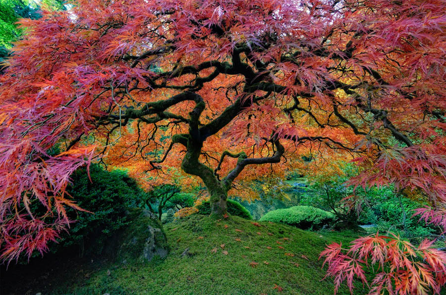 beautiful trees japanese garden portland