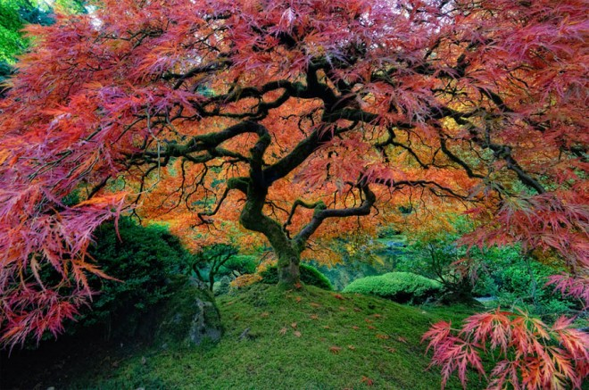 beautiful trees japanese garden in portland