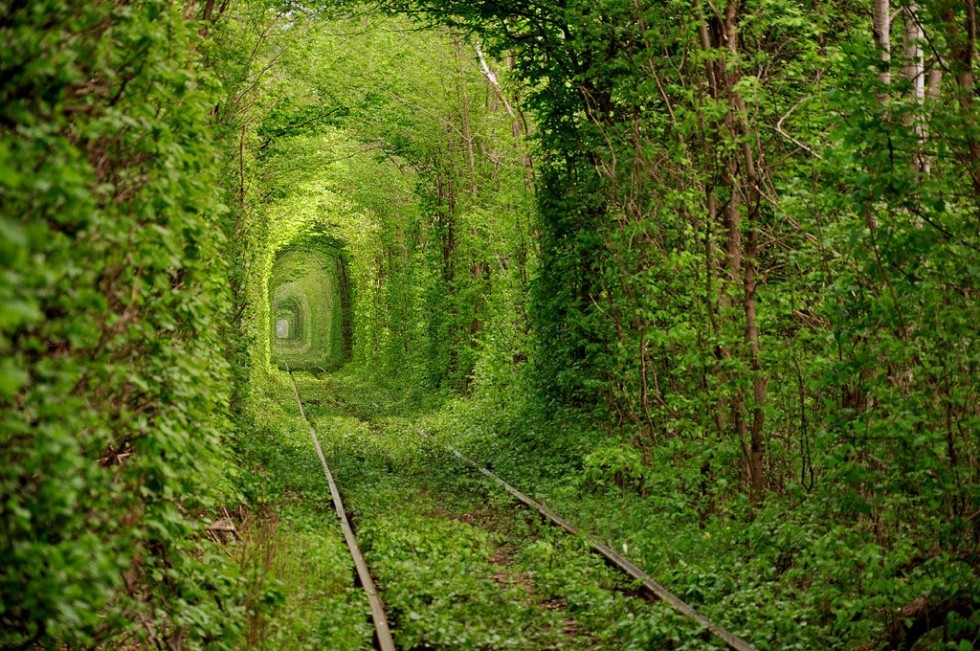 beautiful trees tunnel