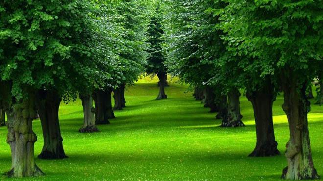 beautiful trees v