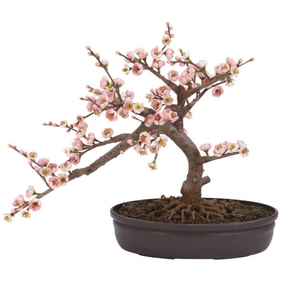 flowering trees cherry bonsai