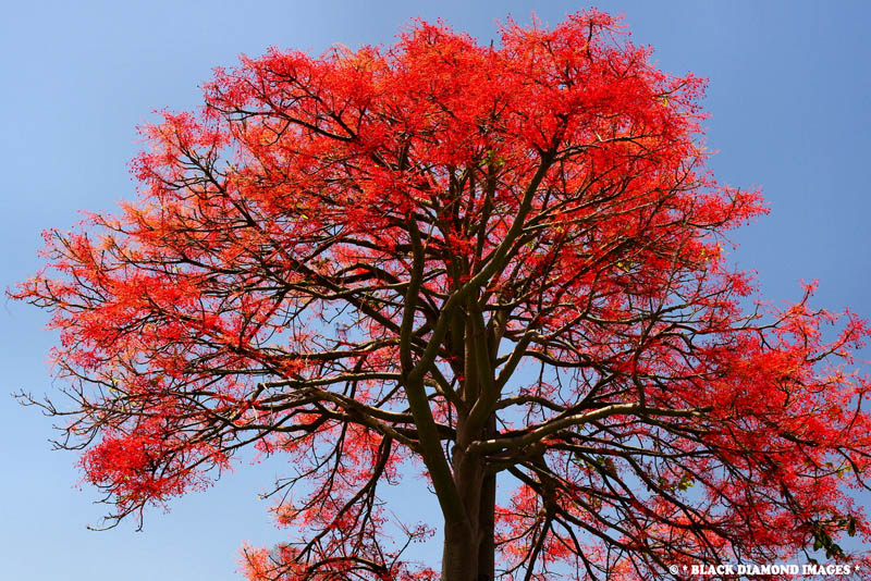 flowering trees orange