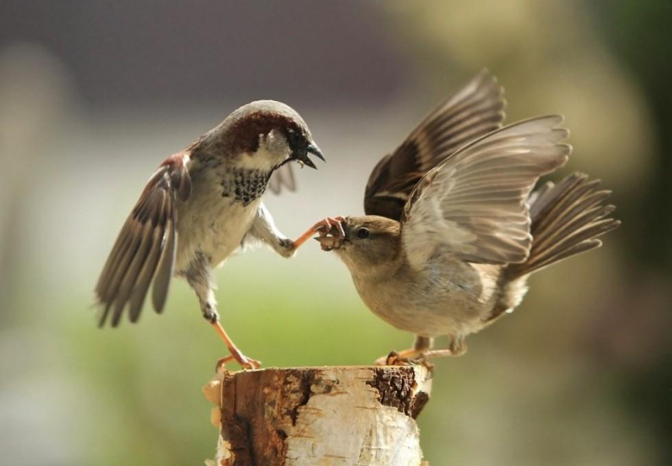 funny birds bird fight