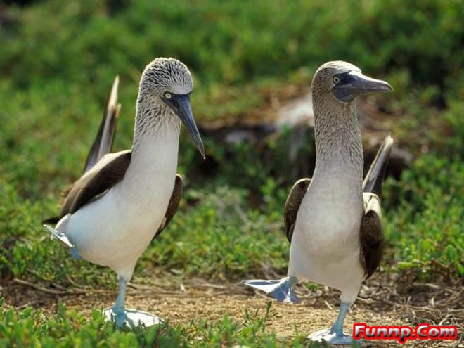 funny birds dance