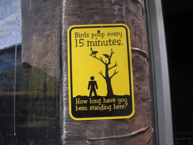 funny signs bird