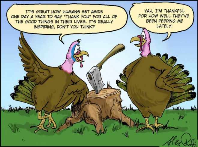 funny thanksgiving pictures turkey talk