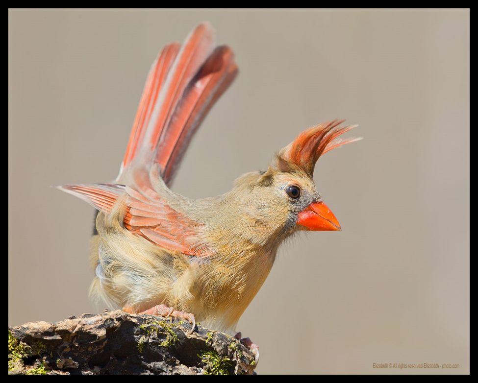 funny birds 1