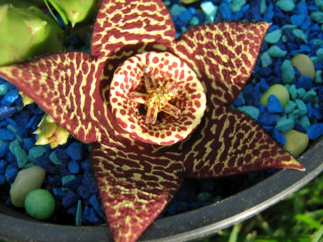 funny plants star cactus