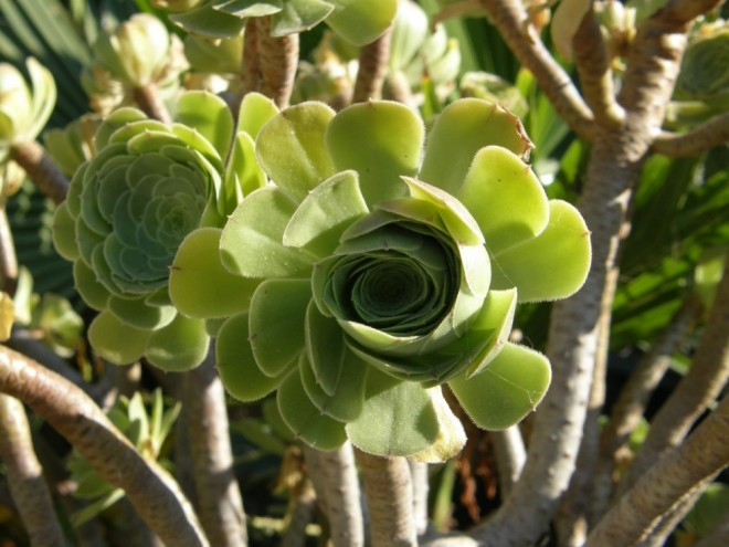 funny plants strange plants