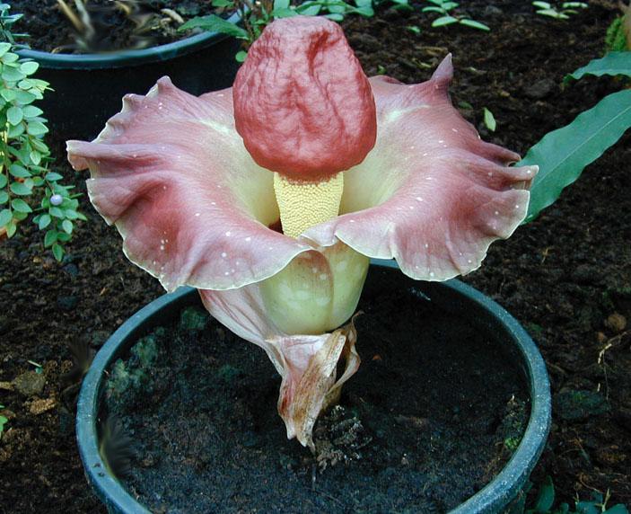 funny plants strange