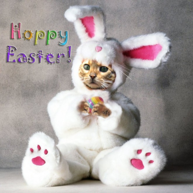 funny easter pictures