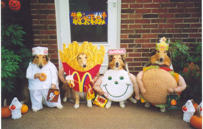 most funny dog costumes