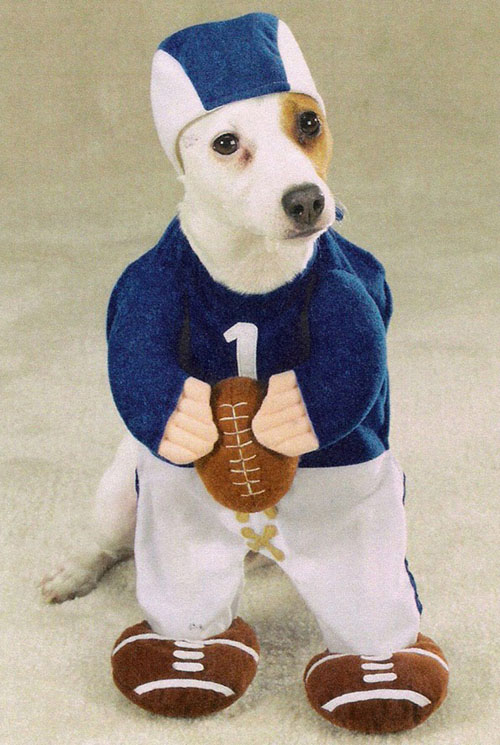 Most funny dog costumes view all