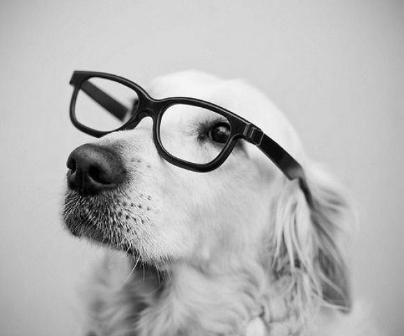 30 Most Funniest and Beautiful Dogs and Cats with Spectacle