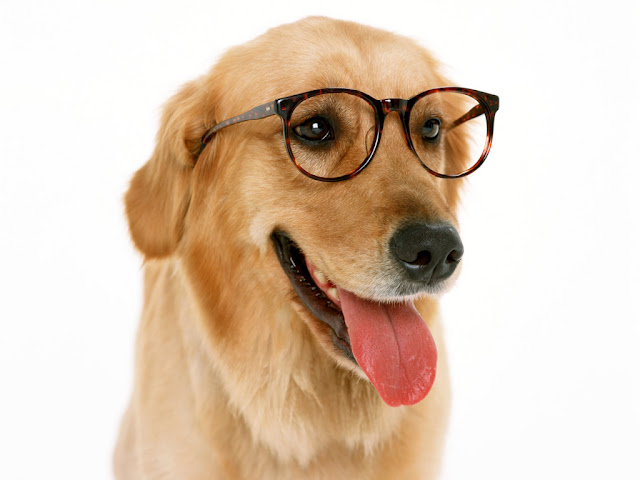 funny-beautiful-amazing-cute-dog-with-spectacle-sun-glass