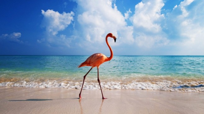 beach flamingo photography