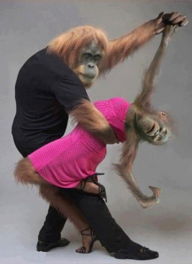 funny dancing monkeys picture
