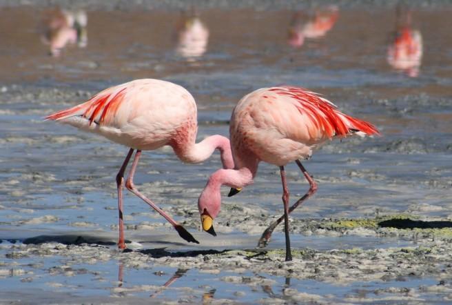 river flamingos photography