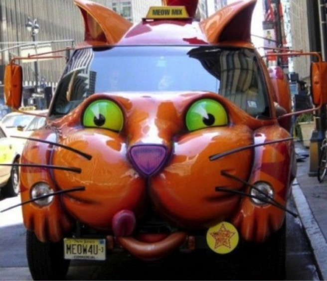 funny cat car pictures