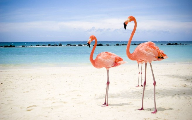 beach flamingos photography