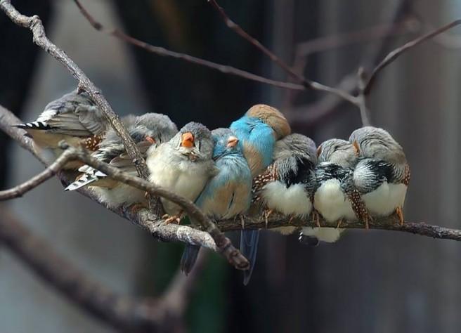 cuddling bird photography