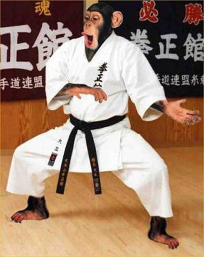 funny karate chimpanzee picture