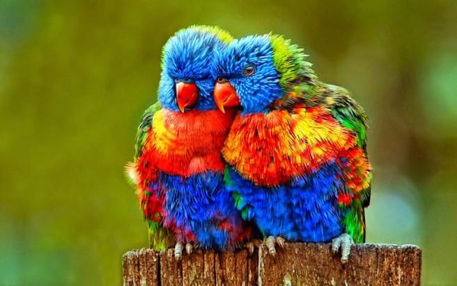 cuddling bird bhotography